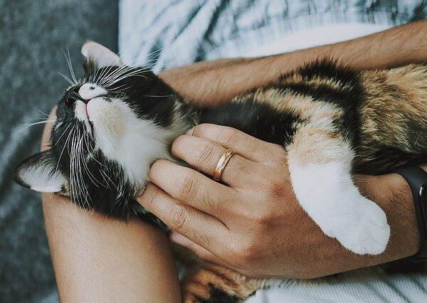 cat-4778387_640